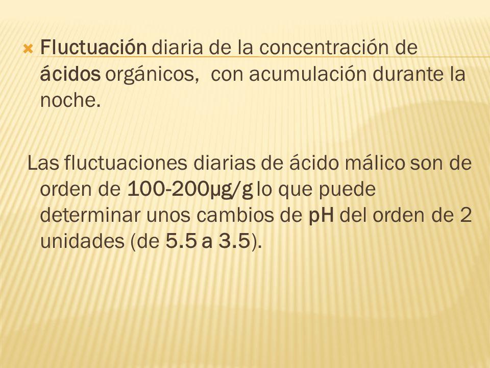 Fluctuación diaria de la concentración de ácidos orgánicos, con acumulación durante la noche.
