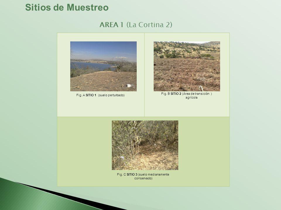 Sitios de Muestreo AREA 1 (La Cortina 2)