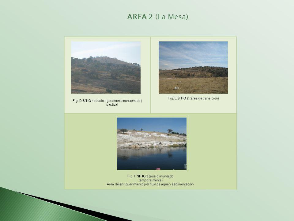 AREA 2 (La Mesa) Fig. E SITIO 2 (área de transición)