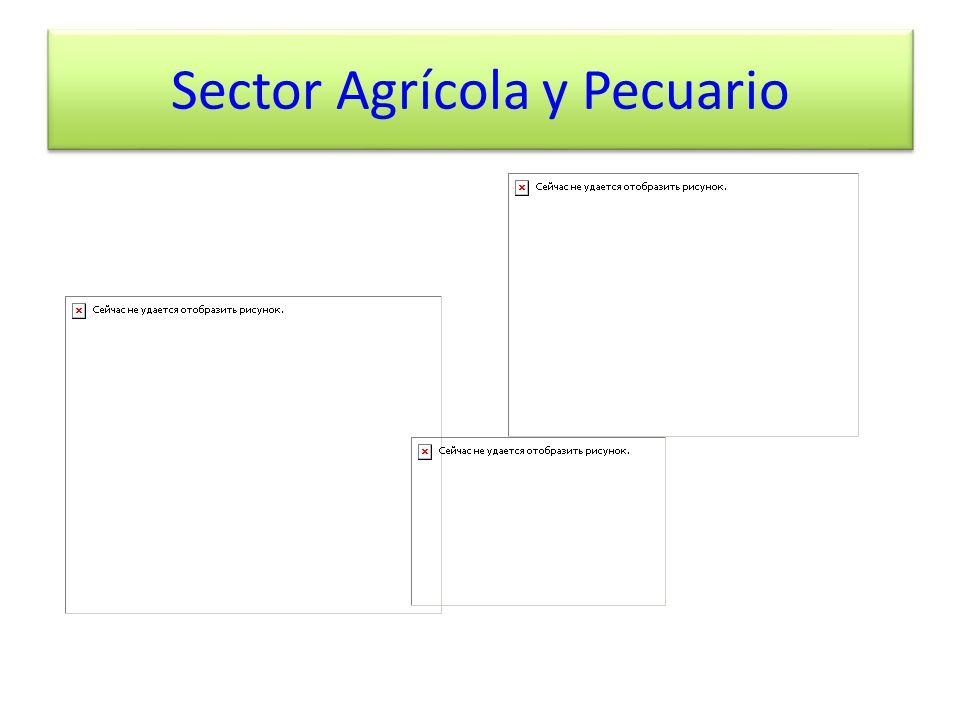 Sector Agrícola y Pecuario