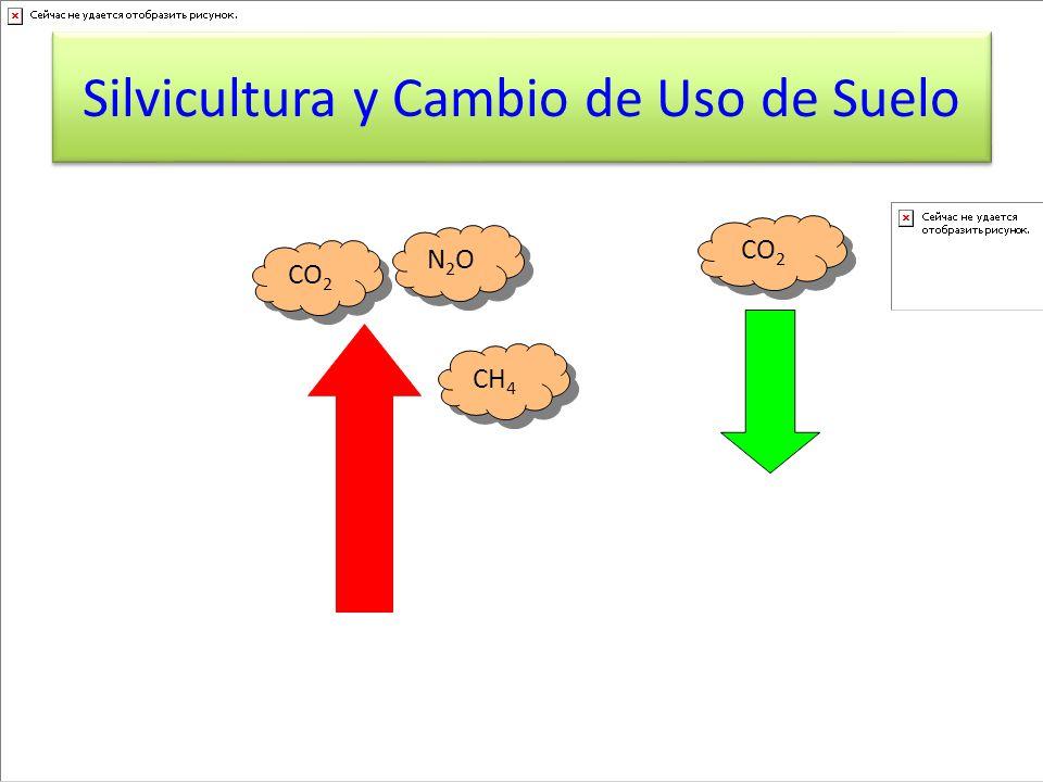 Silvicultura y Cambio de Uso de Suelo