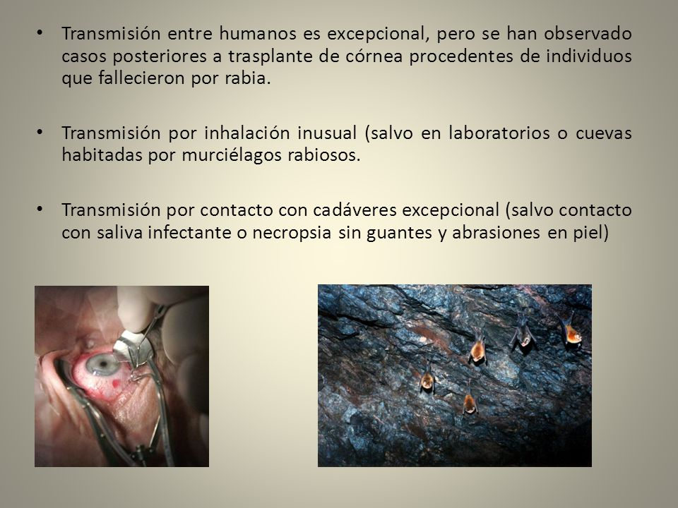 Transmisión entre humanos es excepcional, pero se han observado casos posteriores a trasplante de córnea procedentes de individuos que fallecieron por rabia.