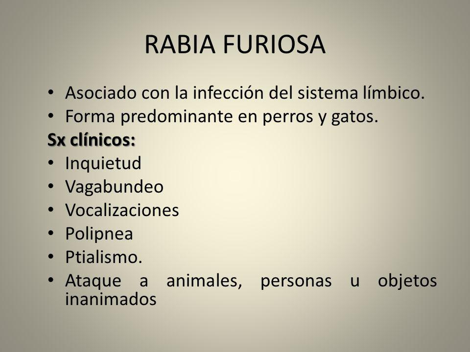 RABIA FURIOSA Asociado con la infección del sistema límbico.