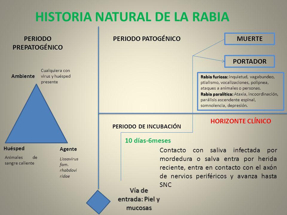 HISTORIA NATURAL DE LA RABIA