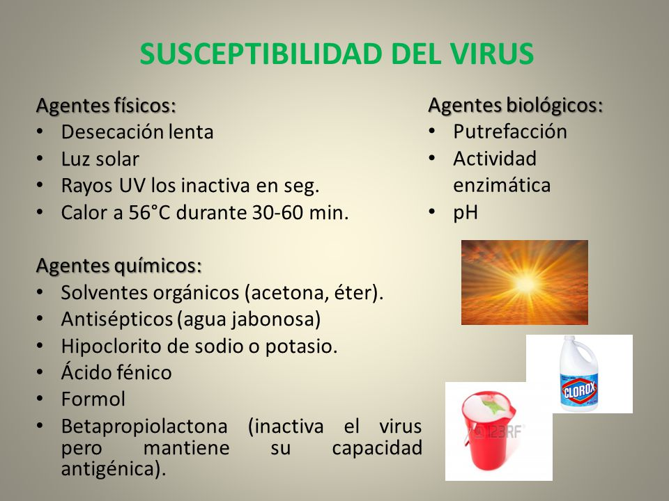 SUSCEPTIBILIDAD DEL VIRUS