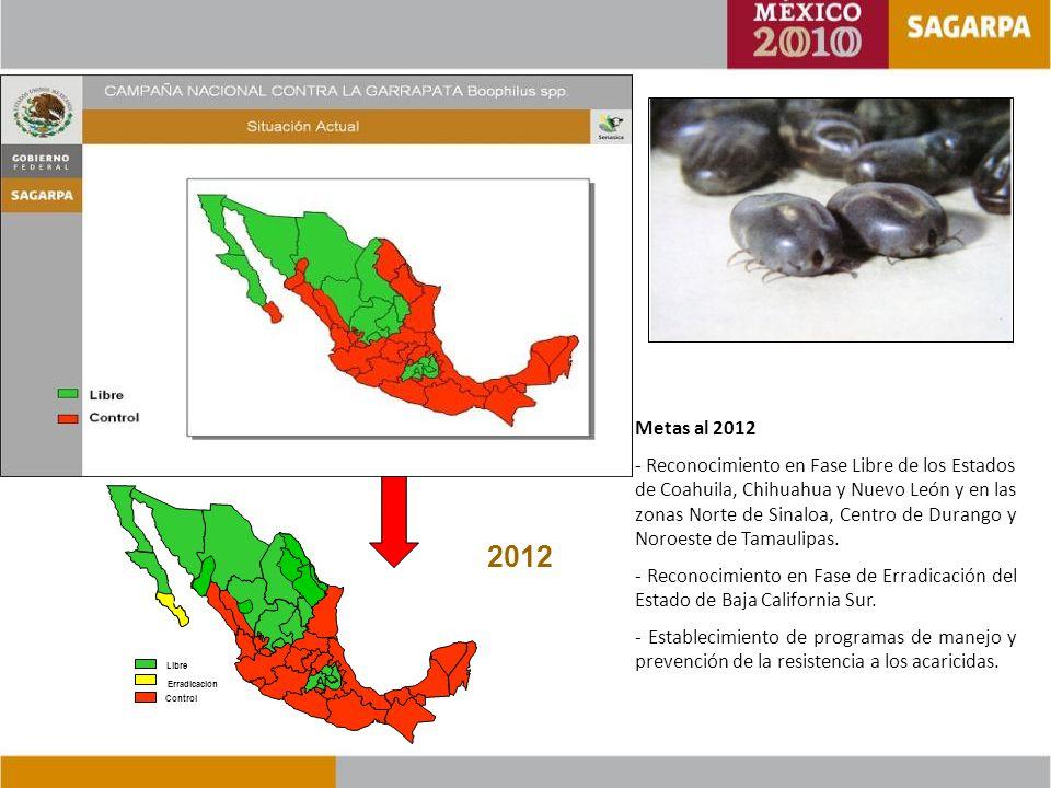 Metas al 2012