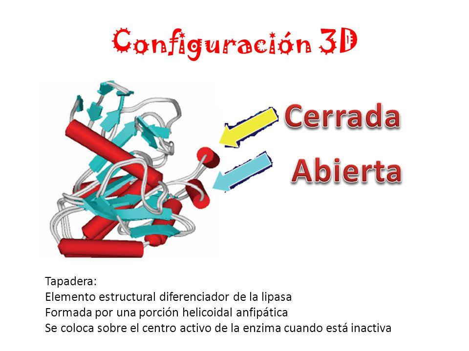 Cerrada Abierta Configuración 3D Tapadera: