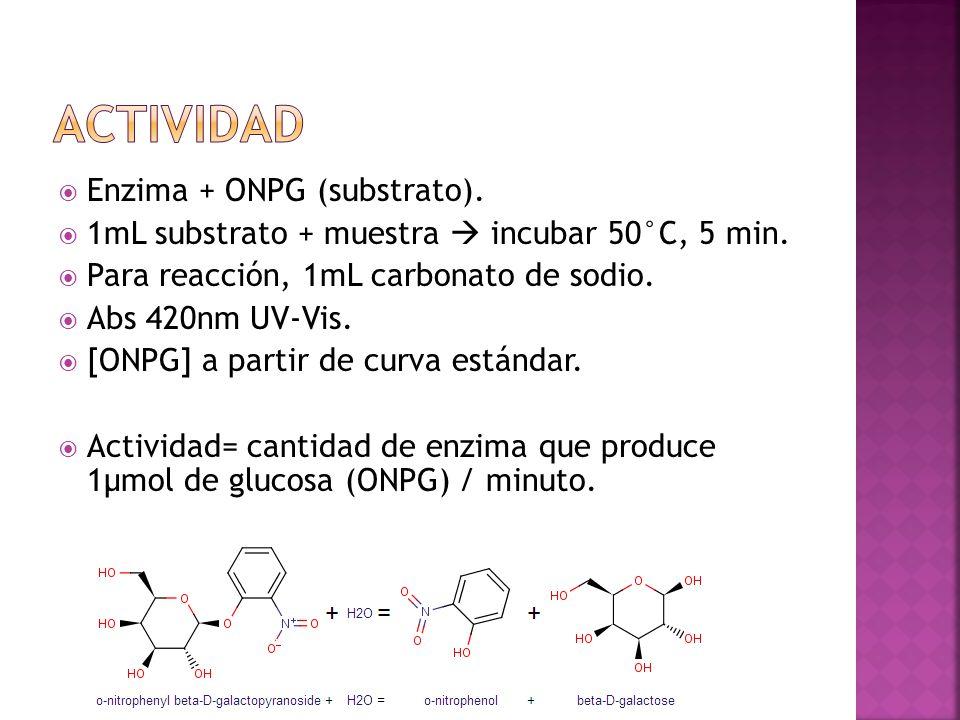 actividad Enzima + ONPG (substrato).