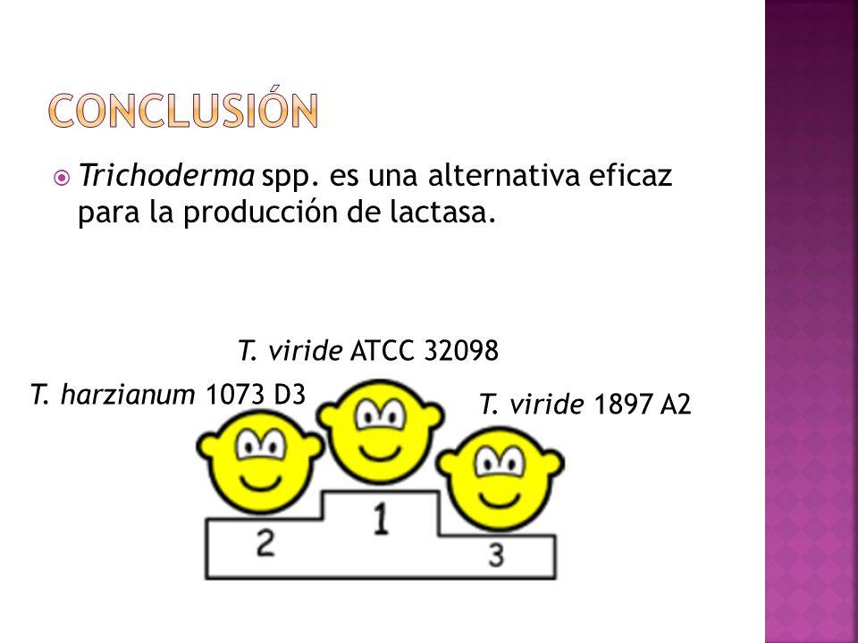 conclusión Trichoderma spp. es una alternativa eficaz para la producción de lactasa. T. viride ATCC 32098.