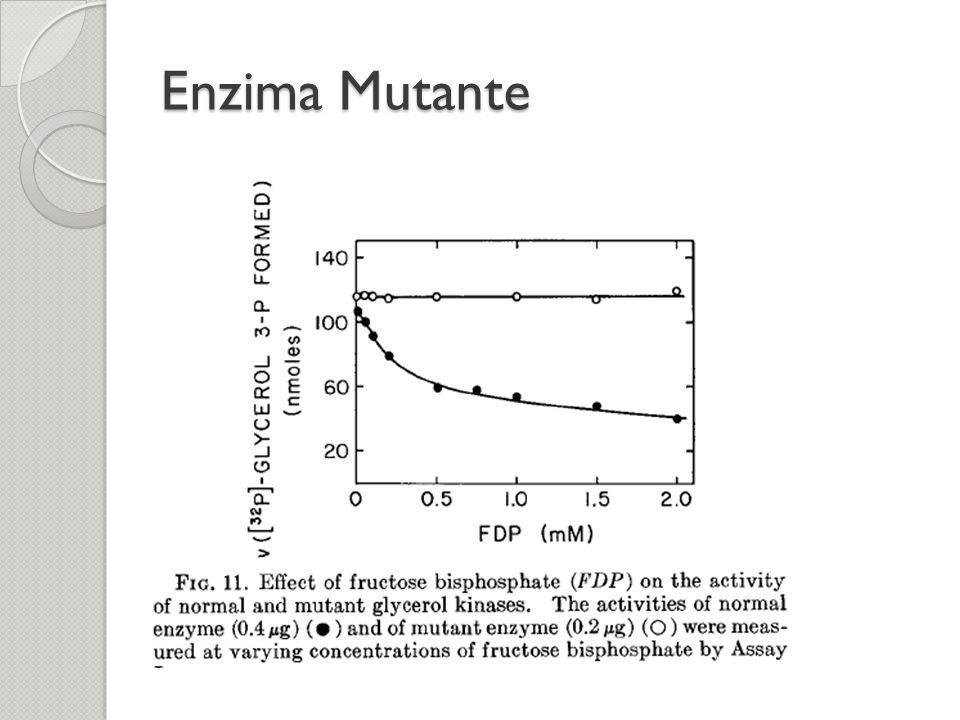 Enzima Mutante