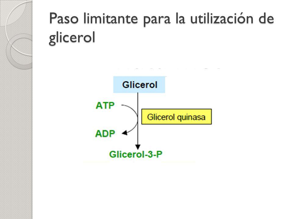 Paso limitante para la utilización de glicerol