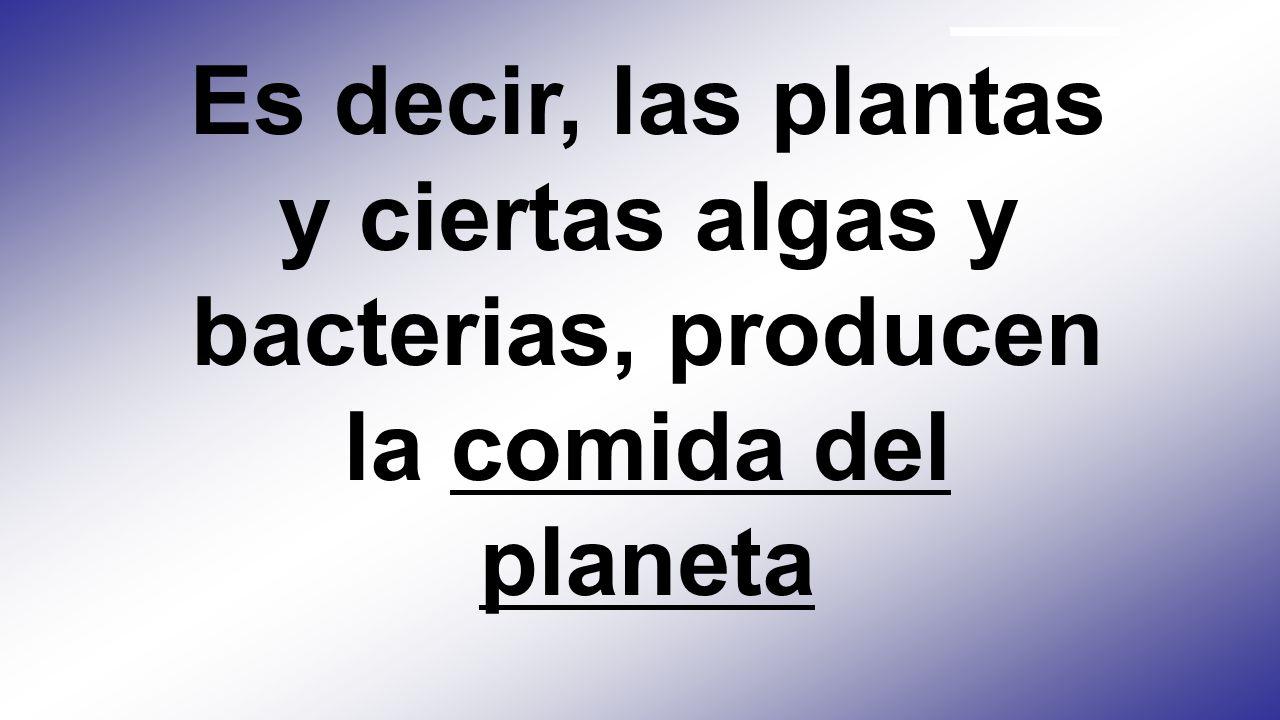 Es decir, las plantas y ciertas algas y bacterias, producen la comida del planeta