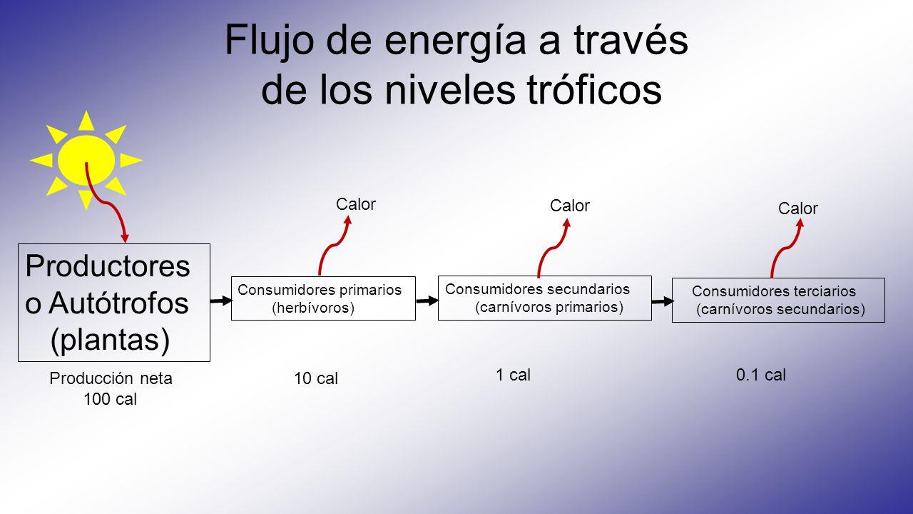 Flujo de energía a través de los niveles tróficos