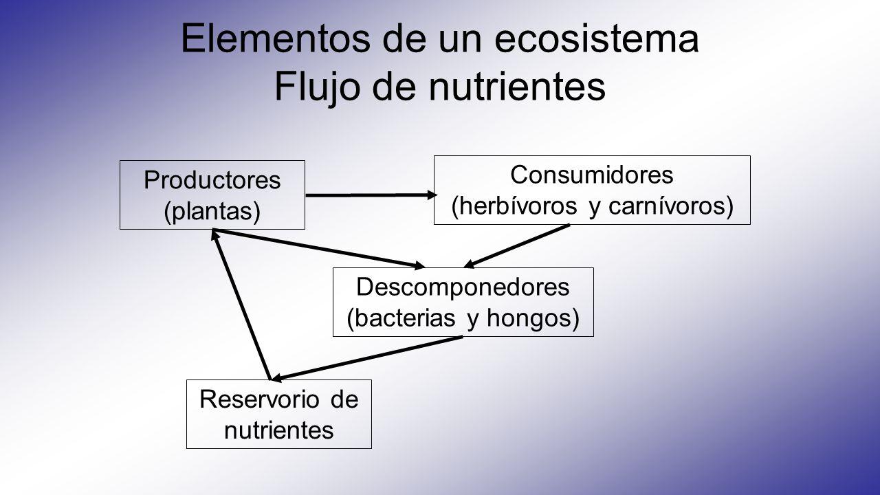 Elementos de un ecosistema Flujo de nutrientes