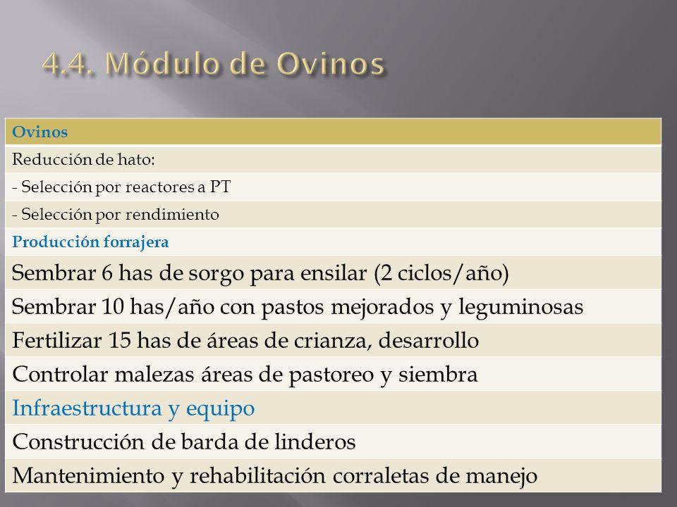 4.4. Módulo de Ovinos Ovinos. Reducción de hato: - Selección por reactores a PT. - Selección por rendimiento.