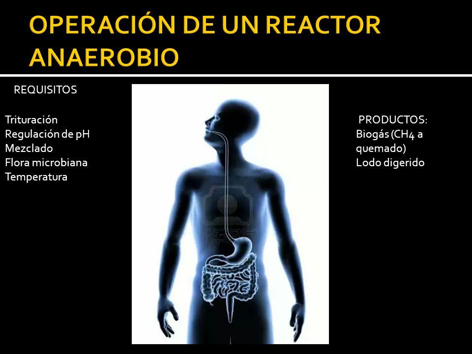 OPERACIÓN DE UN REACTOR ANAEROBIO