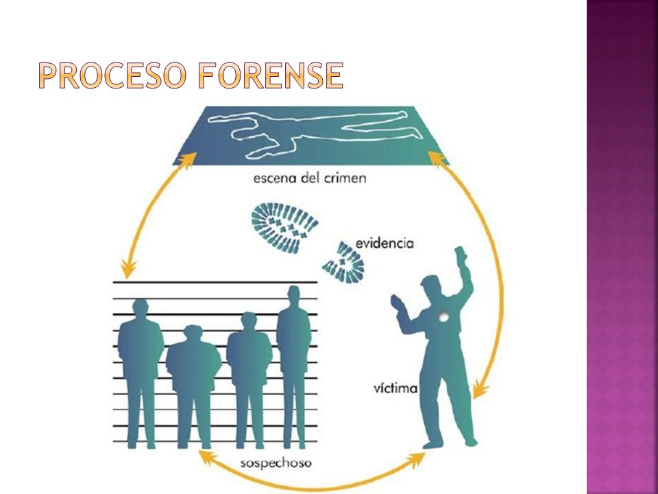 Proceso Forense