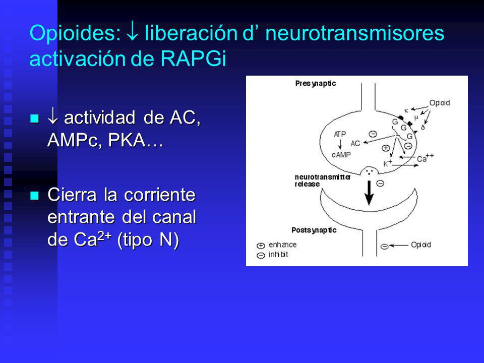 Opioides:  liberación d' neurotransmisores activación de RAPGi