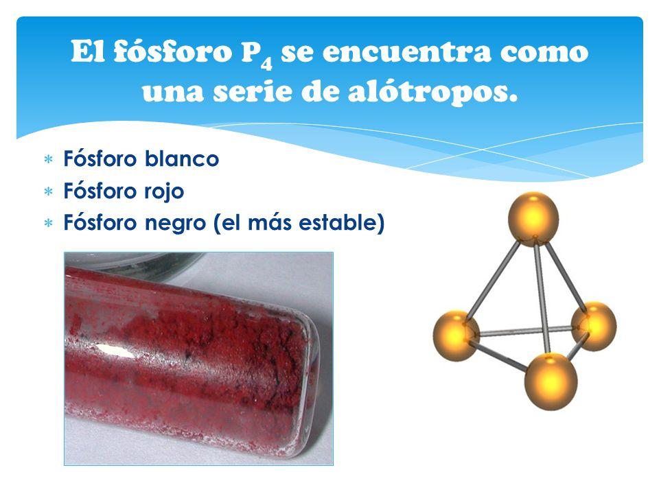 El fósforo P4 se encuentra como una serie de alótropos.