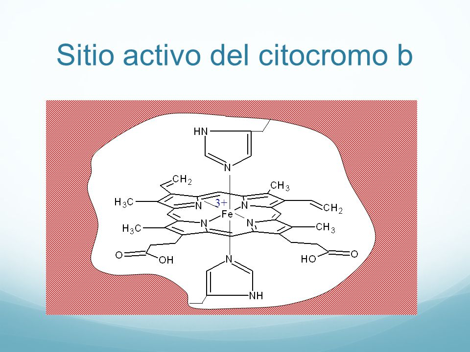Sitio activo del citocromo b