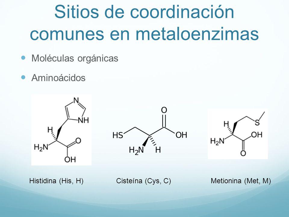 Sitios de coordinación comunes en metaloenzimas