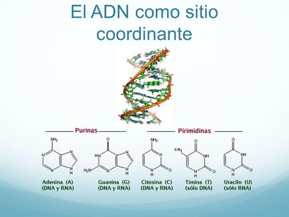 El ADN como sitio coordinante