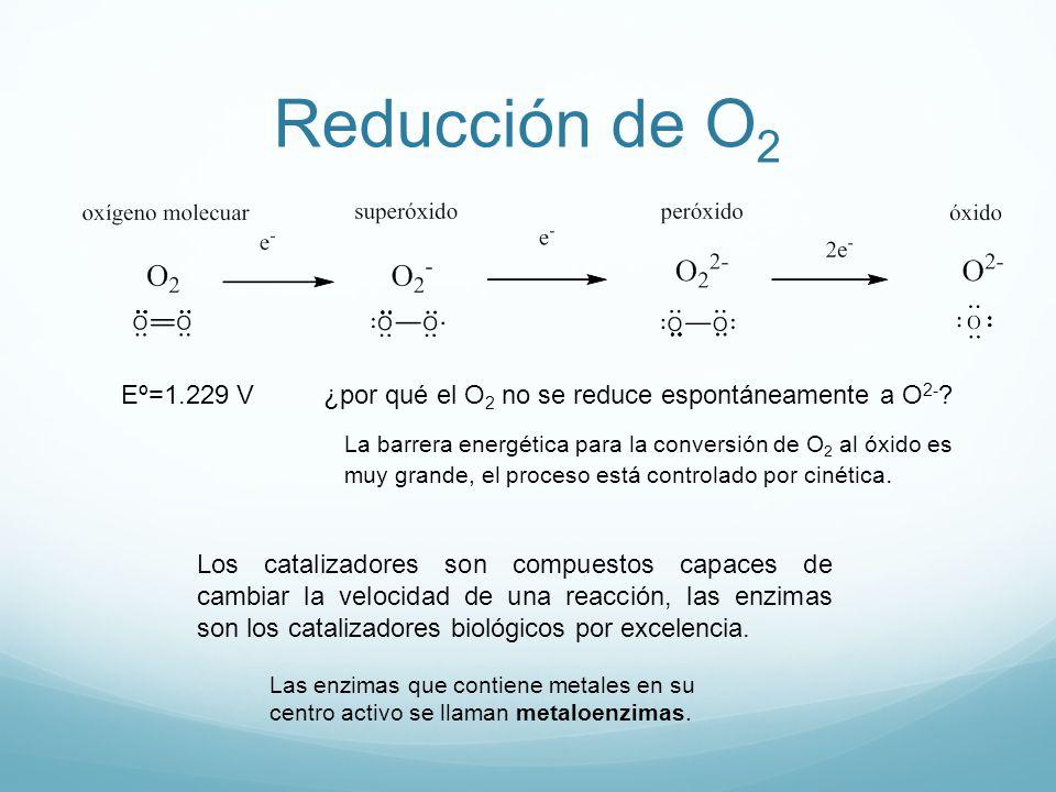 Reducción de O2 Eº=1.229 V. ¿por qué el O2 no se reduce espontáneamente a O2-