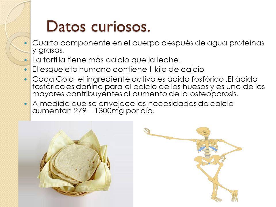 Datos curiosos. Cuarto componente en el cuerpo después de agua proteínas y grasas. La tortilla tiene más calcio que la leche.