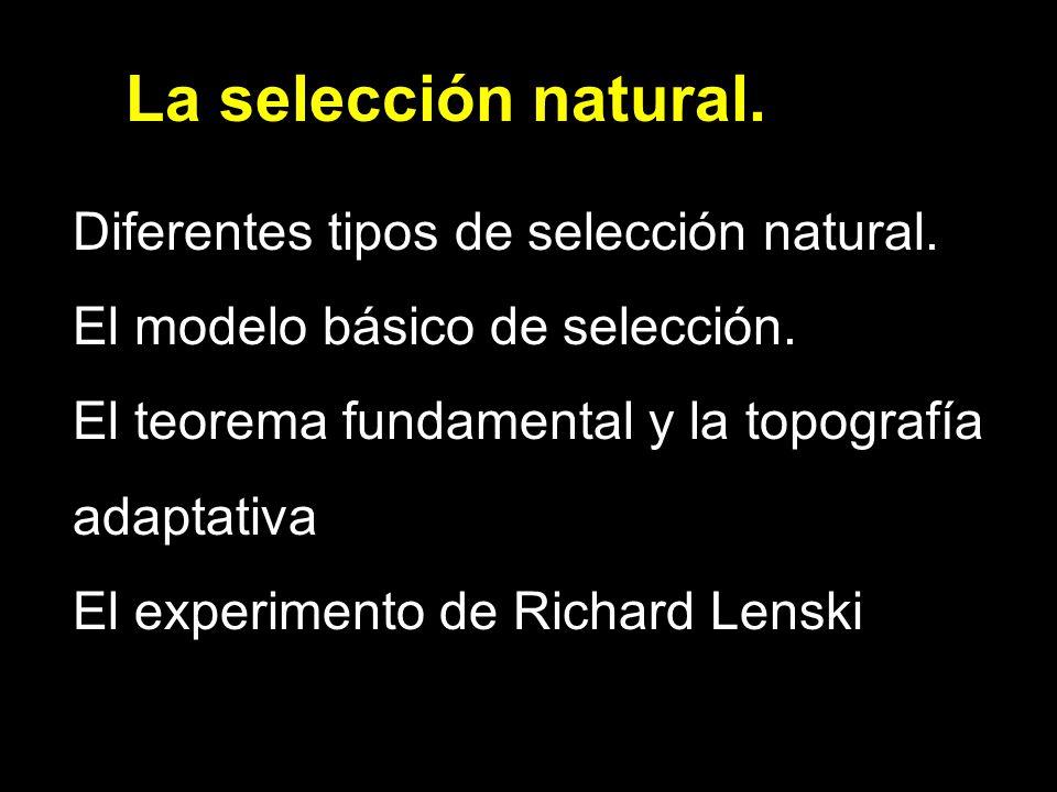 La selección natural. Diferentes tipos de selección natural.