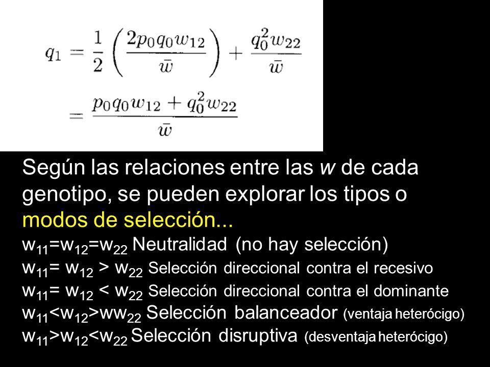 Según las relaciones entre las w de cada genotipo, se pueden explorar los tipos o