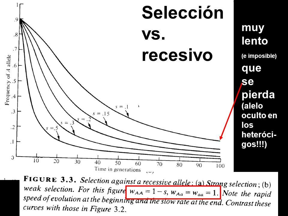 Selección vs. recesivo muy lento se pierda (alelo oculto en los