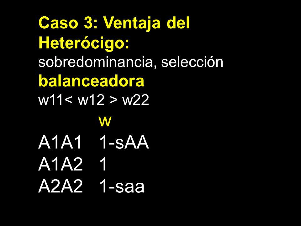 w A1A1 1-sAA A1A2 1 A2A2 1-saa Caso 3: Ventaja del Heterócigo: