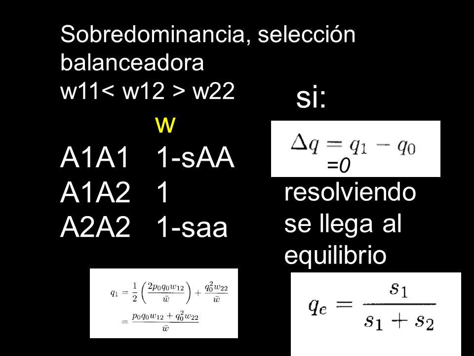 si: w A1A1 1-sAA A1A2 1 A2A2 1-saa resolviendo se llega al equilibrio