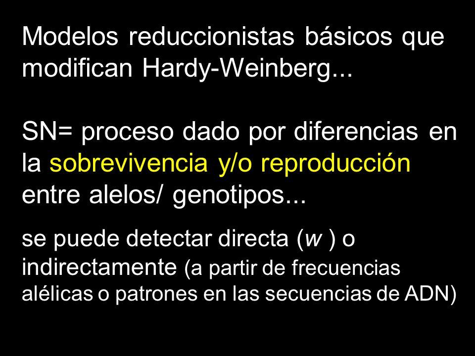 Modelos reduccionistas básicos que modifican Hardy-Weinberg...