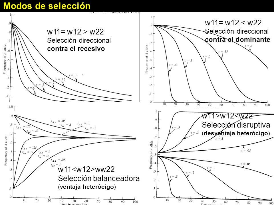 Modos de selección w11= w12 < w22 w11= w12 > w22
