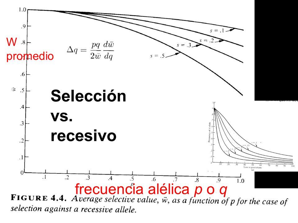 W promedio Selección vs. recesivo frecuencia alélica p o q