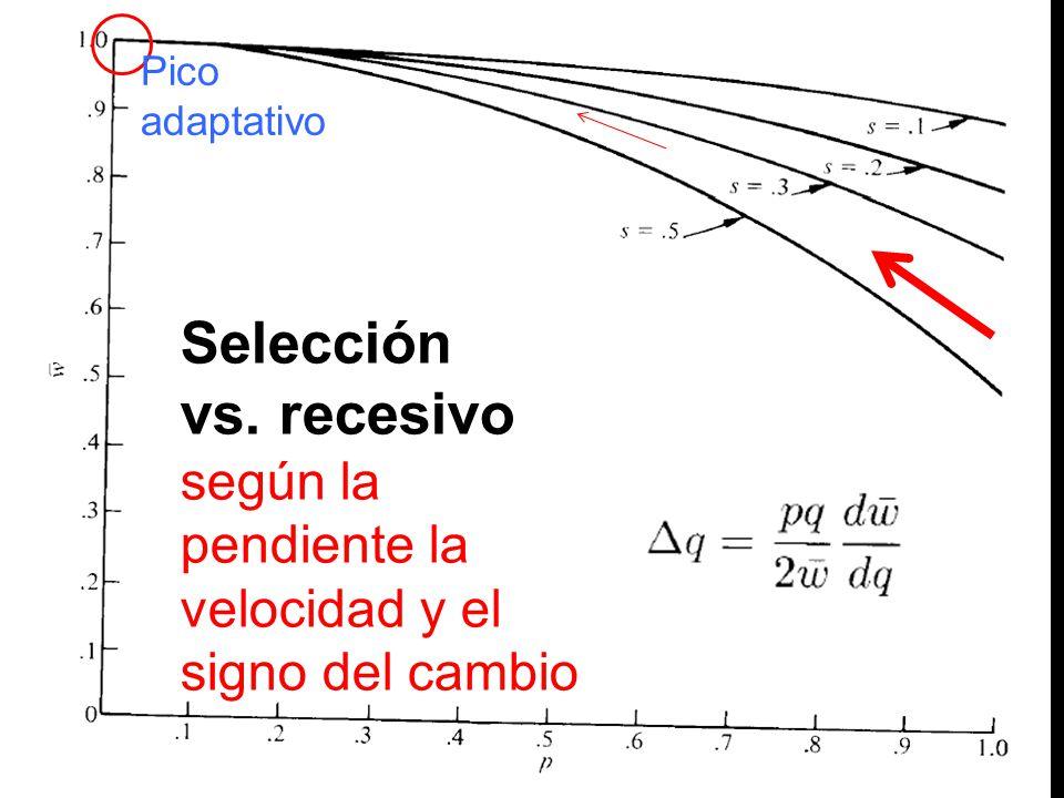 Pico adaptativo Selección vs. recesivo según la pendiente la velocidad y el signo del cambio