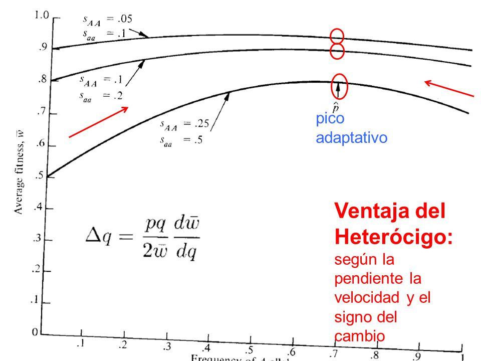 Ventaja del Heterócigo: pico adaptativo