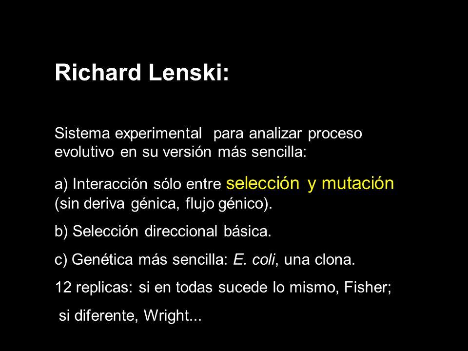 Richard Lenski: Sistema experimental para analizar proceso evolutivo en su versión más sencilla: