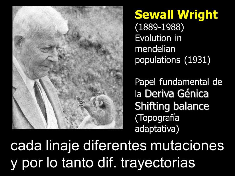 cada linaje diferentes mutaciones y por lo tanto dif. trayectorias