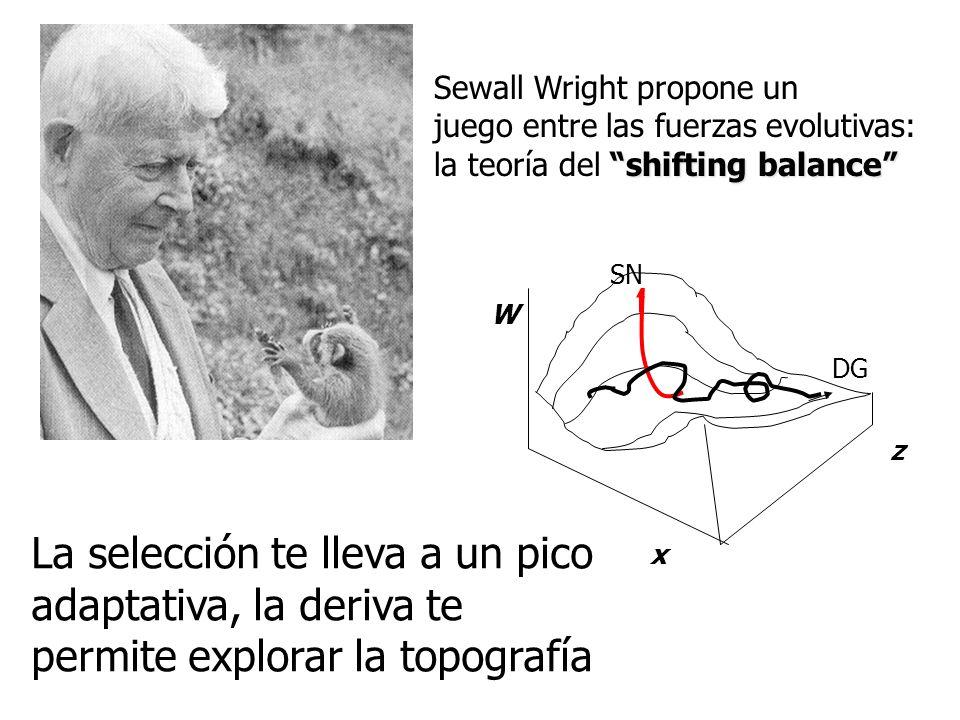 Sewall Wright propone un