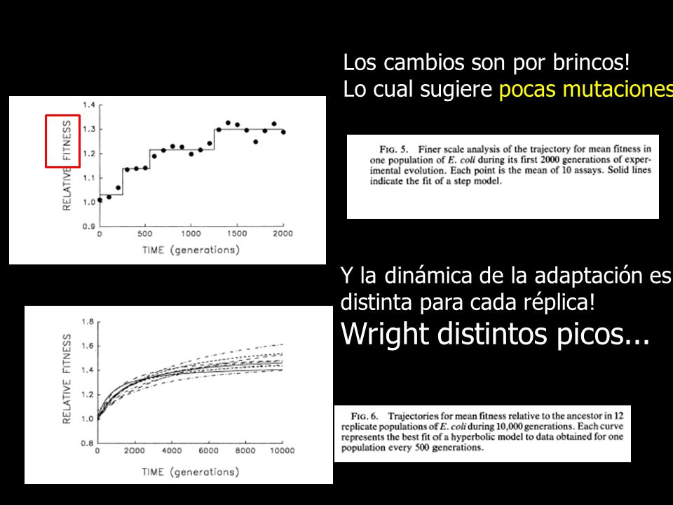 Wright distintos picos...