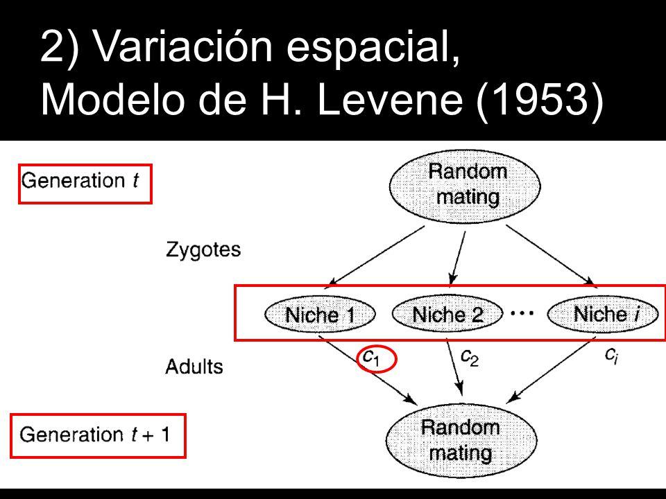 2) Variación espacial, Modelo de H. Levene (1953)