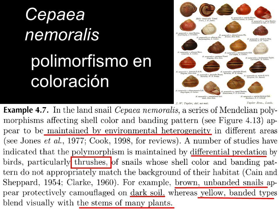Cepaea nemoralis polimorfismo en coloración