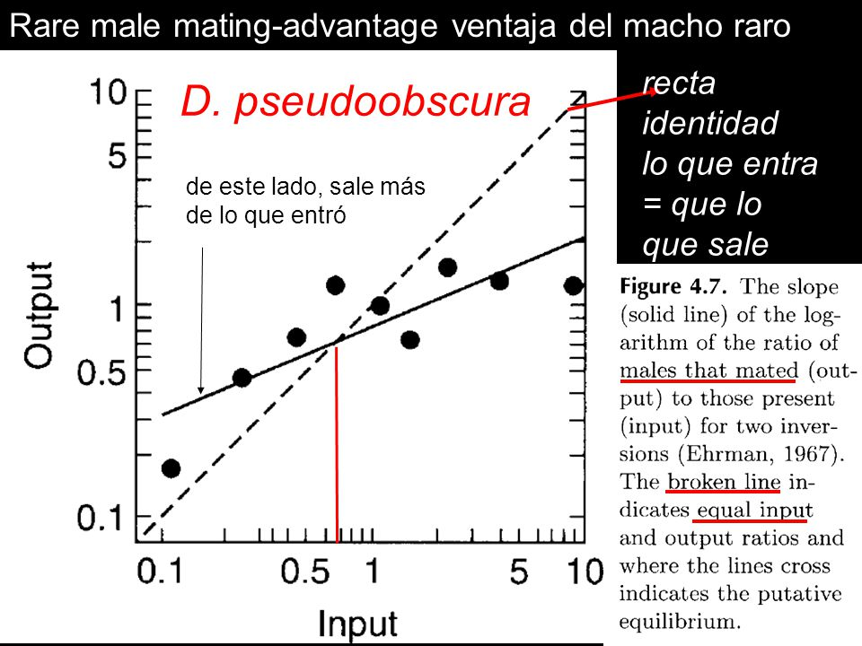 D. pseudoobscura Rare male mating-advantage ventaja del macho raro