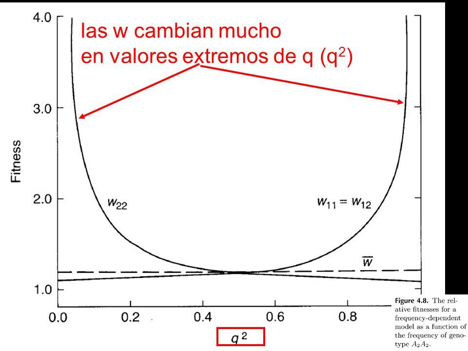 las w cambian mucho en valores extremos de q (q2)