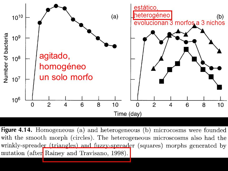 agitado, homogéneo un solo morfo estático, heterogéneo
