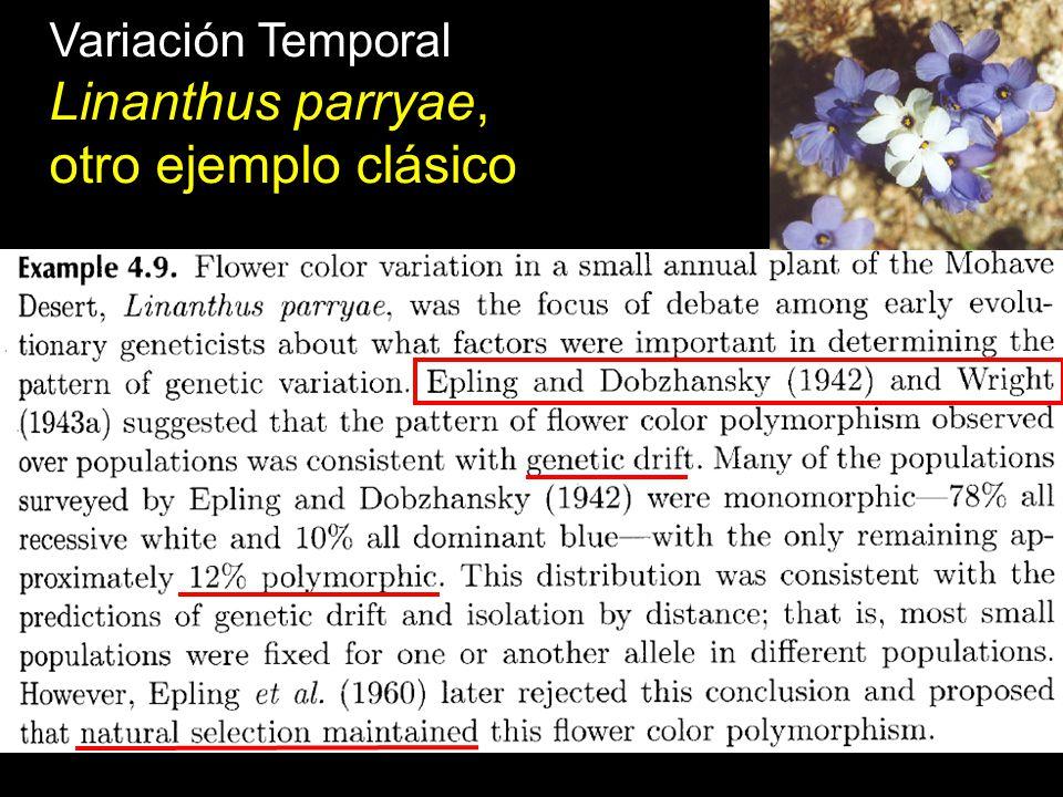 Variación Temporal Linanthus parryae, otro ejemplo clásico