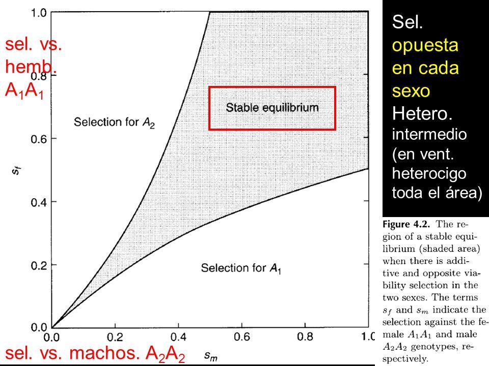 Sel. opuesta sel. vs. en cada sexo hemb. A1A1 Hetero.