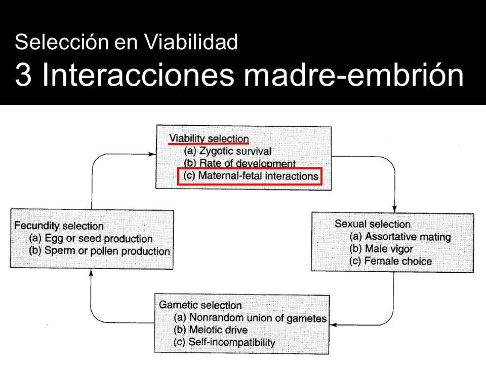 3 Interacciones madre-embrión